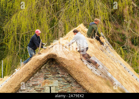 Traditional craftwork employed in thatching the old barn at The Garden House, Buckland Monachorum, Devon - Stock Photo
