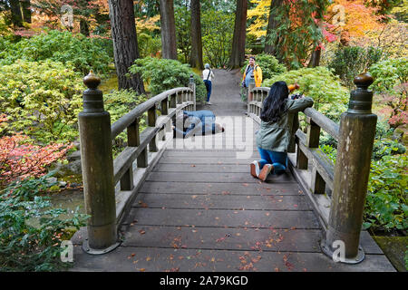 Photographers photographing the Maple trees and other exotic deciduous trees turning yellow and red in the world famous Japanese Gardens in Portland, - Stock Photo