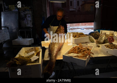 Fishmonger holding a massive fish amongst his various other fish stock on a stall in the traditional covered fish market in Venice in low light. - Stock Photo