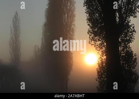 Old tall poplar trees in autumn mist - Stock Photo
