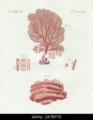 Venus sea fan, Gorgonia flabellum, and organ pipe coral, Tubipora musica. Handcoloured copperplate engraving from Bertuch's 'Bilderbuch fur Kinder' (Picture Book for Children), Weimar, 1798. Friedrich Johann Bertuch (1747-1822) was a German publisher and man of arts most famous for his 12-volume encyclopedia for children illustrated with 1,200 engraved plates on natural history, science, costume, mythology, etc., published from 1790-1830. - Stock Photo