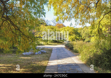 Beijing, Beijing, China. 1st Nov, 2019. Beijing ï¼Å'CHINA-Photo taken on Oct. 31, 2019 shows the Beijing botanical garden in Beijing, China.At present, Beijing botanical garden has adopted an intelligent sweeper to clean the main road of the park, making it more intelligent and scientific. Credit: SIPA Asia/ZUMA Wire/Alamy Live News - Stock Photo