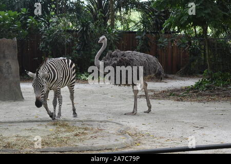 zebra and ostrich are walking in the forest - Stock Photo