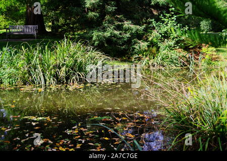 idyllic pond with floating autumn leaves on it and grasses and trees on the shore - Stock Photo