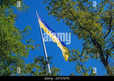 Ukrainian flag flying on a flagpole in against the green branches of white acacia - Stock Photo