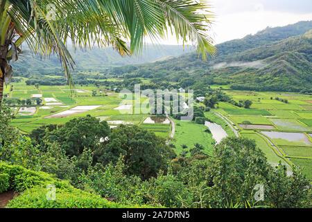 Taro fields in Hanalei Valley - Kauai, Hawaii - Stock Photo