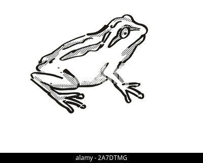 Retro cartoon style drawing of a Whistling Tree Frog , a native New Zealand wildlife on isolated white background done in black and white - Stock Photo