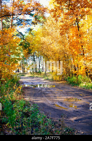 Road in autumn forest after rain. Non urban scene. - Stock Photo