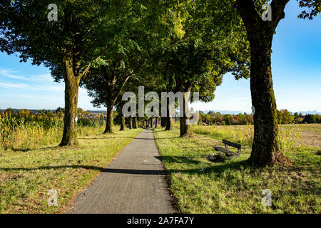 Alley of lime trees in the city of Ebersberg in autumn Bavaria Germany - Stock Photo