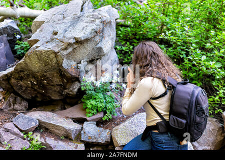 Maroon Bells Crater Lake hike in Aspen, Colorado in July 2019 summer and woman photographer back taking picture photo of columbine flowers - Stock Photo