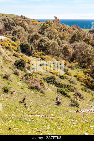 Fields in Andalusia by the sea in a sunny day - Stock Photo