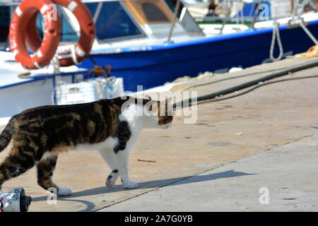 A white and tabby cat walking by brightly coloured fishing boats on a mediterranean , lurking around the rocks looking for food then sleeping - Stock Photo