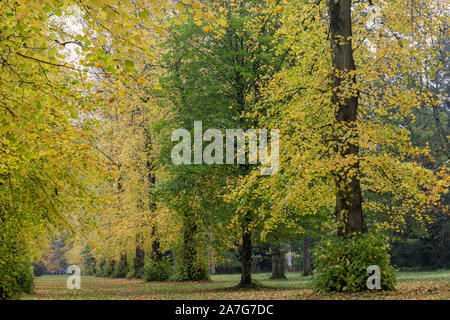 Aututmn in Lime Avenue at Westonbirt Arboretum, Gloucestershire, England, UK - Stock Photo