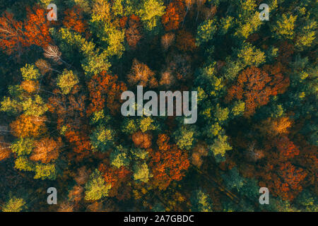 Trees from above in autumn yellow and brown tones. Beautiful background with a top view of the forest - Stock Photo