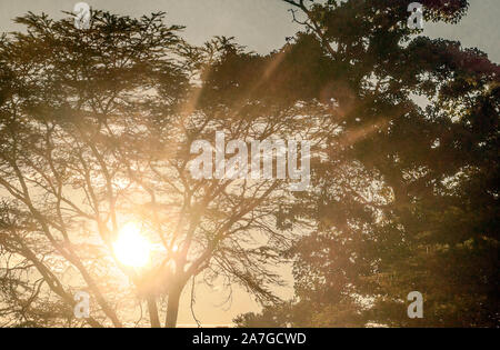 Sunset behind the branches of a tree in Kenya - Stock Photo