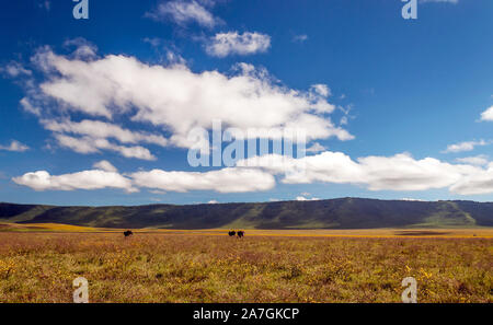 Baboons in the grasslands of Tanzania