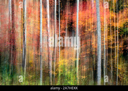 Painterly abstract motion blur of vibrant fall colors in Pisgah National Forest, Brevard, North Carolina, USA - Stock Photo