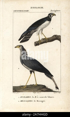 Long-winged harrier, Circus buffoni, and secretarybird, Sagittarius serpentarius. Handcoloured copperplate stipple engraving from Dumont de Sainte-Croix's 'Dictionary of Natural Science: Ornithology,' Paris, France, 1816-1830. Illustration by J. G. Pretre, engraved by Guyard, directed by Pierre Jean-Francois Turpin, and published by F.G. Levrault. Jean Gabriel Pretre (17801845) was painter of natural history at Empress Josephine's zoo and later became artist to the Museum of Natural History. Turpin (1775-1840) is considered one of the greatest French botanical illustrators of the 19th century - Stock Photo