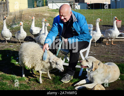 Schkeuditz, Germany. 14th Oct, 2019. Werner Dreßler combs his lamb Nanni on a farm, before he walks with him, Labrador Emmy (r) and the other dogs and the mama sheep. The 79-year-old trained master toolmaker takes the five animals for a walk in the city every day and is an eye-catcher for locals and visitors alike. The lamb Nanni was raised with the bottle and is accustomed to the walks with his mama sheep and the dogs from an early age. Credit: Waltraud Grubitzsch/dpa-Zentralbild/ZB/dpa/Alamy Live News - Stock Photo