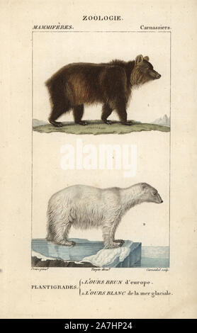 European brown bear, Ursus arctos, and polar bear, Ursus maritimus (vulnerable). Handcoloured copperplate stipple engraving from Frederic Cuvier's 'Dictionary of Natural Science: Mammals,' Paris, France, 1816. Illustration by J. G. Pretre, engraved by Carnonkel, directed by Pierre Jean-Francois Turpin, and published by F.G. Levrault. Jean Gabriel Pretre (17801845) was painter of natural history at Empress Josephine's zoo and later became artist to the Museum of Natural History. Turpin (1775-1840) is considered one of the greatest French botanical illustrators of the 19th century. - Stock Photo