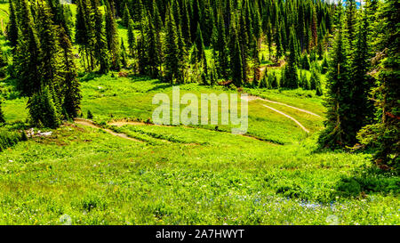Downhill biking on Tod Mountain at the alpine village of Sun Peaks in the Shuswap Highlands of British Columbia, Canada - Stock Photo