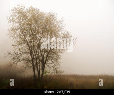 Fog over lake. Tree silhouette in mist. Tranquil background ideal inspirational message. Sad, melancholic image. Autumn. - Stock Photo