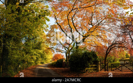 Stunning autumnal scene of colourful autumn leaves on trees in a quiet country lane, West Yorkshire, UK - Stock Photo