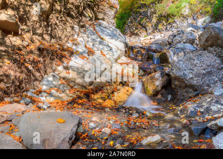 Small rivulet in a mountain forest - Stock Photo
