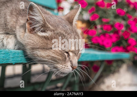 Cute gray cat sitting on a wooden bench outdoors .A gray cat sits on a wooden bench near the house. The cat has beautiful yellow eyes. - Stock Photo