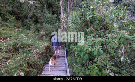Man and dog walking down the wood board - Stock Photo
