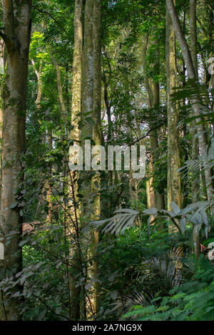 The natural beauty of the rain forest view