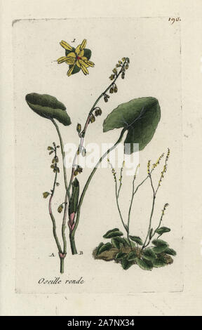 Buckler leaved sorrel, Rumex scutatus. Handcoloured botanical drawn and engraved by Pierre Bulliard from his own 'Flora Parisiensis,' 1776, Paris, P. F. Didot. Pierre Bulliard (1752-1793) was a famous French botanist who pioneered the three-colour-plate printing technique. His introduction to the flowers of Paris included 640 plants. - Stock Photo