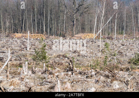 Storm damage after the Cyclone Friederike, 2018, Weser Uplands, Hesse, Germany, Europe - Stock Photo