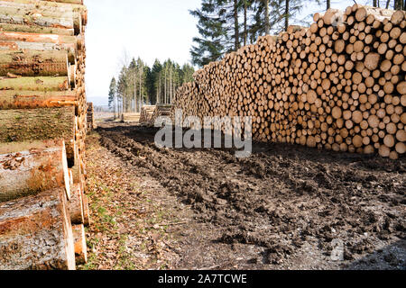 Woodpiles after storm damage after the Cyclone Friederike, 2018, Weser Uplands, Hesse, Germany, Europe - Stock Photo