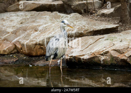Berlin, Germany -5 august 2019: heron in Berlin zoo - Stock Photo