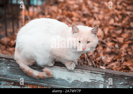 A sad cat with an orange-white color sits on a fence - Stock Photo