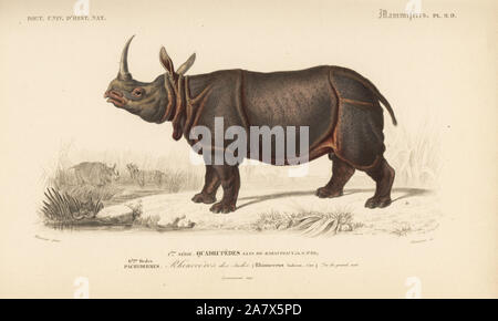 Indian rhinoceros, Rhinoceros unicornis (vulnerable). Handcolored engraving by Fournier after an illustration by Meunier from Charles d'Orbigny's Dictionnaire Universel d'Histoire Naturelle (Dictionary of Natural History), Paris, 1849. - Stock Photo