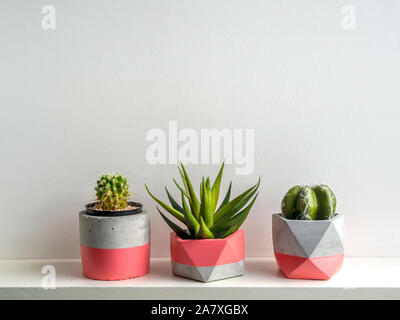Cactus plants in pink modern geometric concrete planters on white shelf isolated on white background. Beautiful painted concrete pots. - Stock Photo
