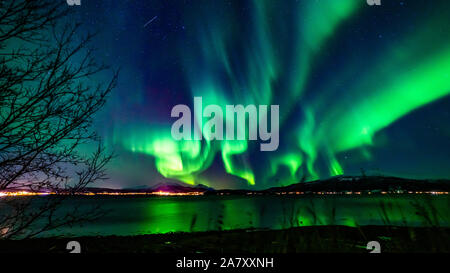 Northern Lights, Aurora Borealis, Troms, Norway, Reflexions on the Fjord, dancing Lights, View over the Fjord, tree in front - Stock Photo