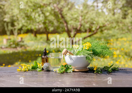 Arrangement of different wild herbal medicinal plants gathered on wooden table( Alchemilla vulgaris, common lady's mantle, Primula veris, Yarrow, comm - Stock Photo