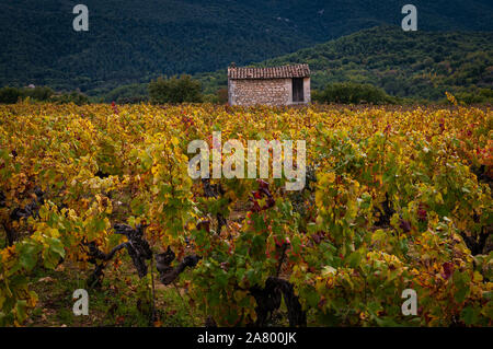 french vinyard in autumn with a small stone building. provence, France. Luberon mountains in background