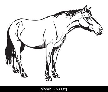 Monochrome decorative portrait of horse standing in profile, horse exterior. Vector isolated illustration in black color on white background. Image fo - Stock Photo