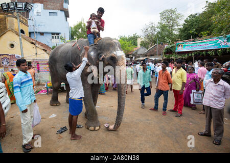 Mahout holding crying baby girl on temple elephant during Kutti Kudithal Festival in Trichy, Tamil Nadu, India - Stock Photo