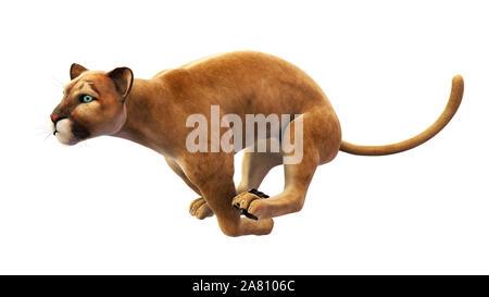 Puma, mountain lion sprinting, wild animal isolated on white background - Stock Photo