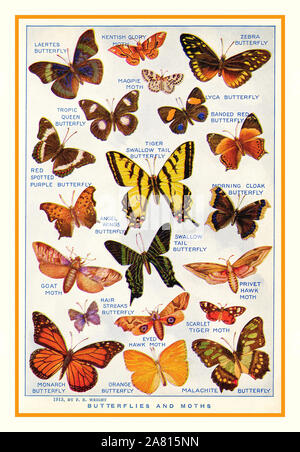 Vintage illustration page 1913  'Butterflies and Moths' Laertes Butterfly, Zebra Butterfly, Tiger Swallow Tail Butterfly, Goat Moth, Scarlet Tiger Moth, Monarch Butterfly and Malachite Butterfly.  Original page from a natural history dictionary published 1922. - Stock Photo