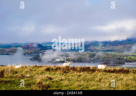 Sheep grazing in hills above Afon Dwyryd river estuary with low cloud on mountains of northern Snowdonia beyond. Eisingrug Harlech Gwynedd Wales UK - Stock Photo