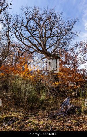 Nature: Autumn in Montejo de la Sierra beech, Madrid. - Stock Photo