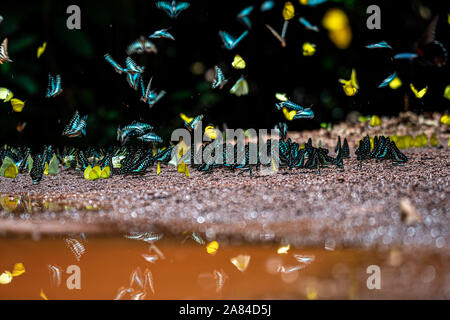 Fluttering Flight Mechanisms in Insects - Stock Photo