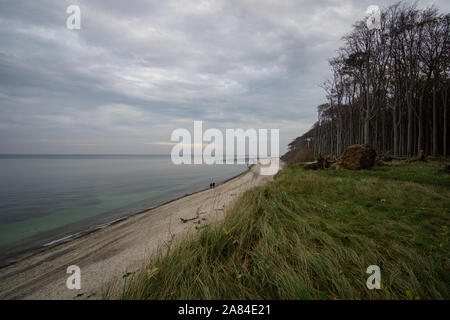 view of the Baltic Sea at the ghost forest in nienhagen - Stock Photo