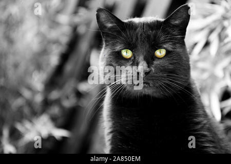 Black cat portrait with green eyes.